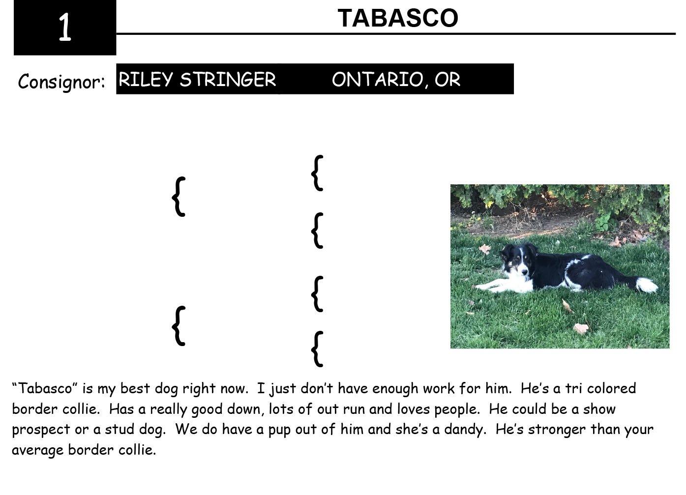 2020 Shelman Family Horse Sale 1 ~ Lot 1 Tabasco